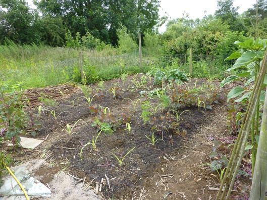 polyculture experiment