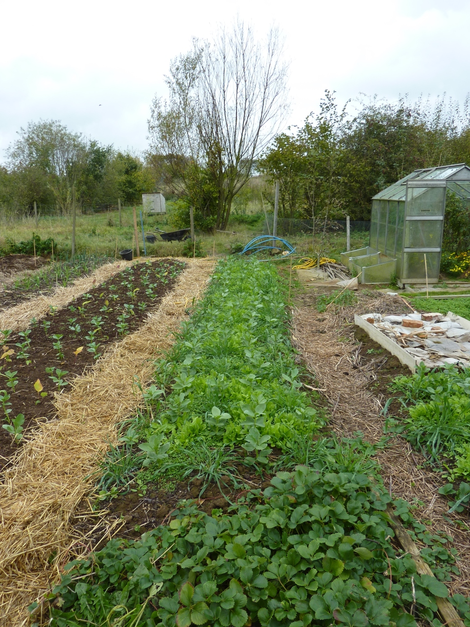 Rye, Broad Bean, White Clover, and Chicory polyculture