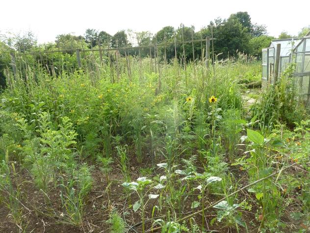 Vegetable Grain Polyculture
