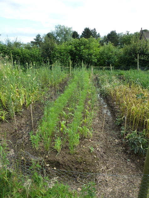 Vegetable Grain Polyculture